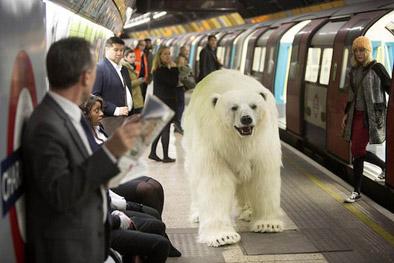 Bildresultat för isbjörn på gata